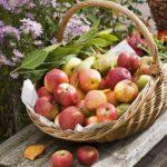 Свято Спаса (Преображення, яблучний Спас)